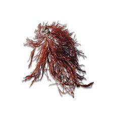 Jūras zāles RED HORNWEED, 1kg, Holande