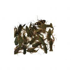 Vēzis šaurspīļu (Crayfish), 20/30, dzīvs, 1*5kg, Grieķija
